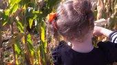Fotografie Batole dívka v kukuřice maze