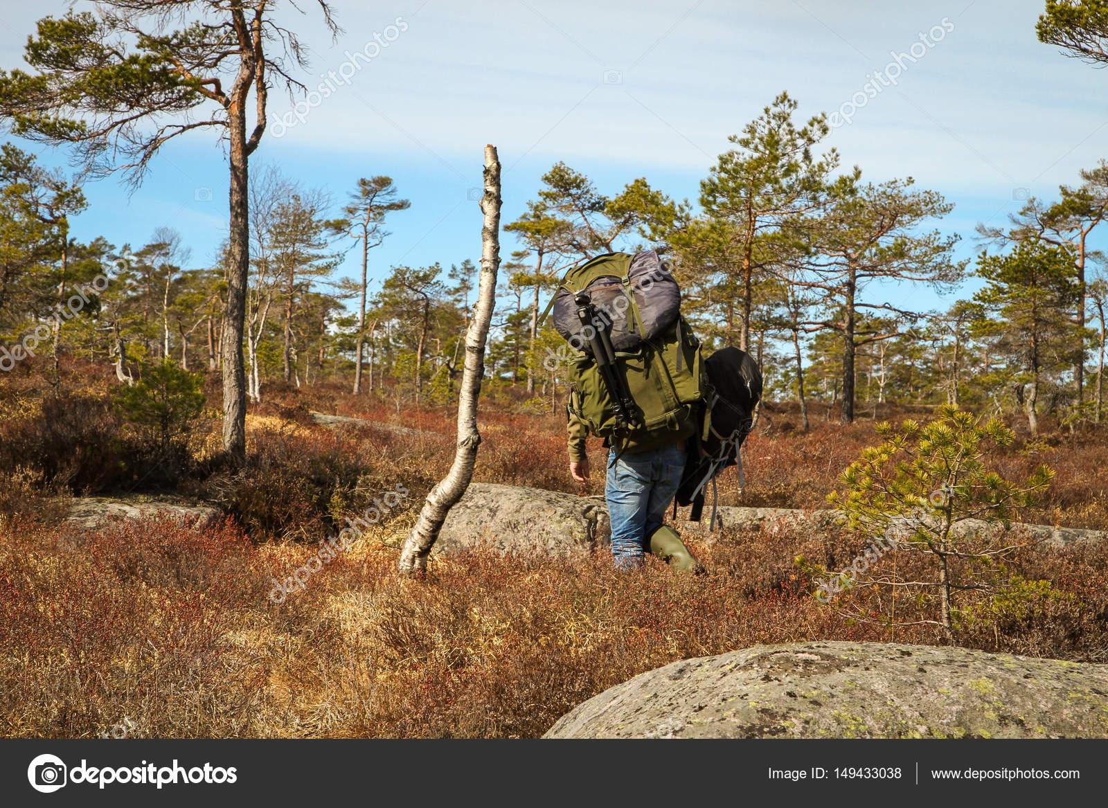 7b1832844fd Volwassen man, sterke mannelijke fotograaf dragen van zware rugzakken,  wandelen in het Noorse forest