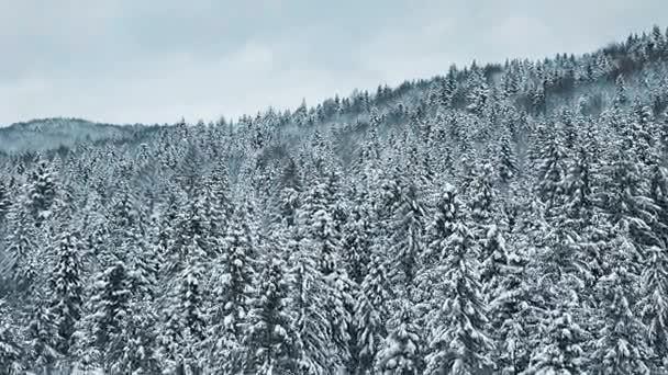 Letecký pohled na zimní les. tustan Karpaty