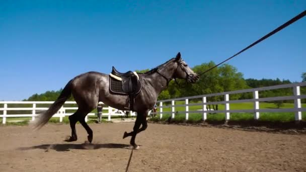 training of the horse running in a small circle