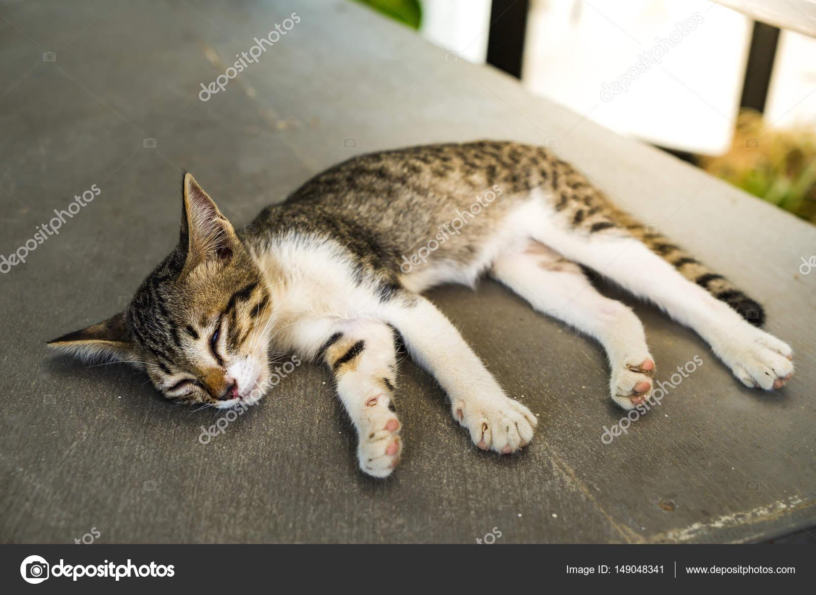 Кот спит только на полу