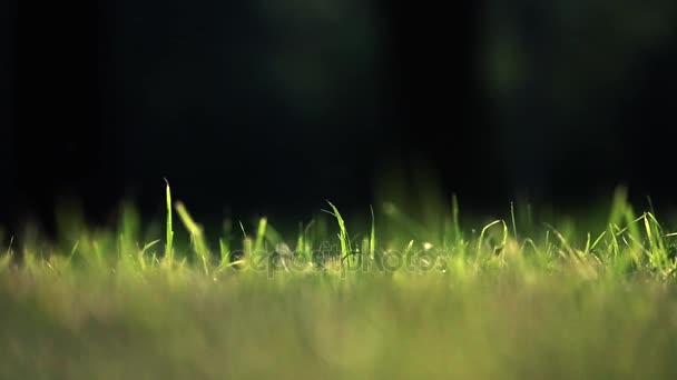 das Gras im Wind bewegt sich. Sommer