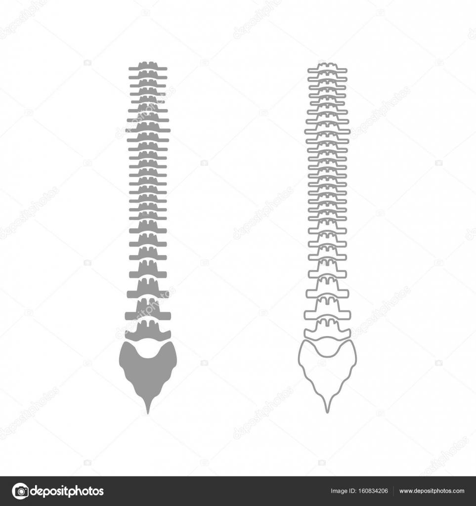 Columna vertebral humana el gris establecer icono — Vector de stock ...