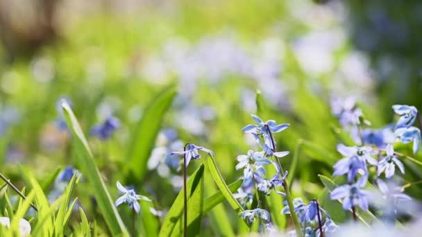 detailní záběr fialových divokých květin na jaře