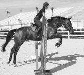 Frau springt auf Pferd im Springring
