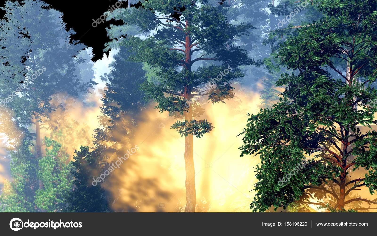 Imágenes Bosques De Noche Bonitos Desastre Con Fuego En La