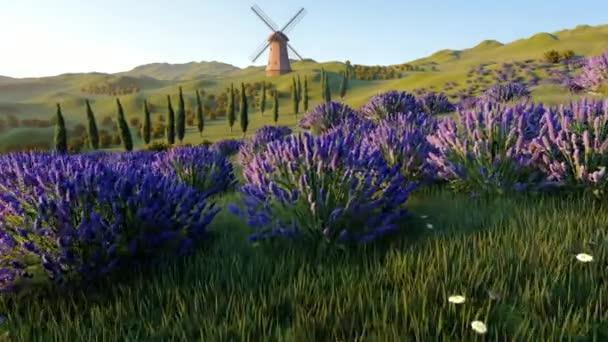 Levandulová pole s osamělou větrný mlýn