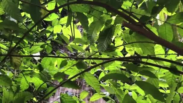 Husté houští rostlin v neproniknutelné džungli