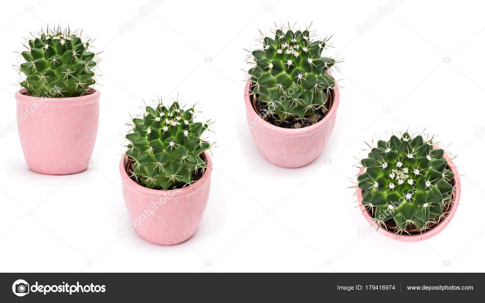 Kolekcja Kaktusów Na Białym Tle Aloes I Inne Sukulenty W