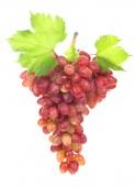 Fényképek Érett vörös szőlő. Rózsaszín csomó levelek elszigetelt fehér. A vágógörbét. Teljes mélységélesség