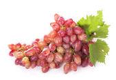 Fényképek Érett vörös szőlő levelek elszigetelt fehér