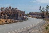 Strada nazionale con foresta bruciata. Portogallo
