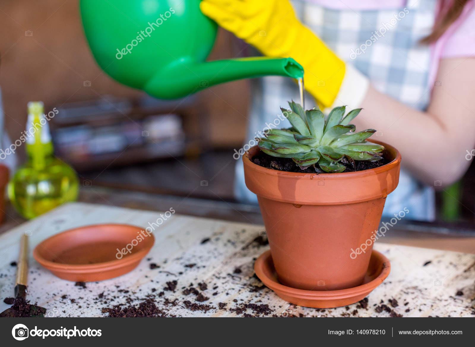 frau bewässerung pflanzen — stockfoto © natashafedorova #140978210