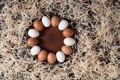 tojások csirke lemez