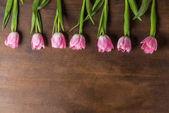 Rózsaszín tulipán a táblázat