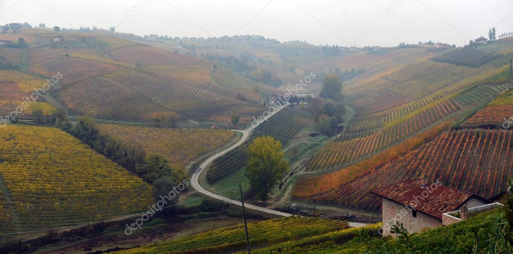panorama of autumn vineyards