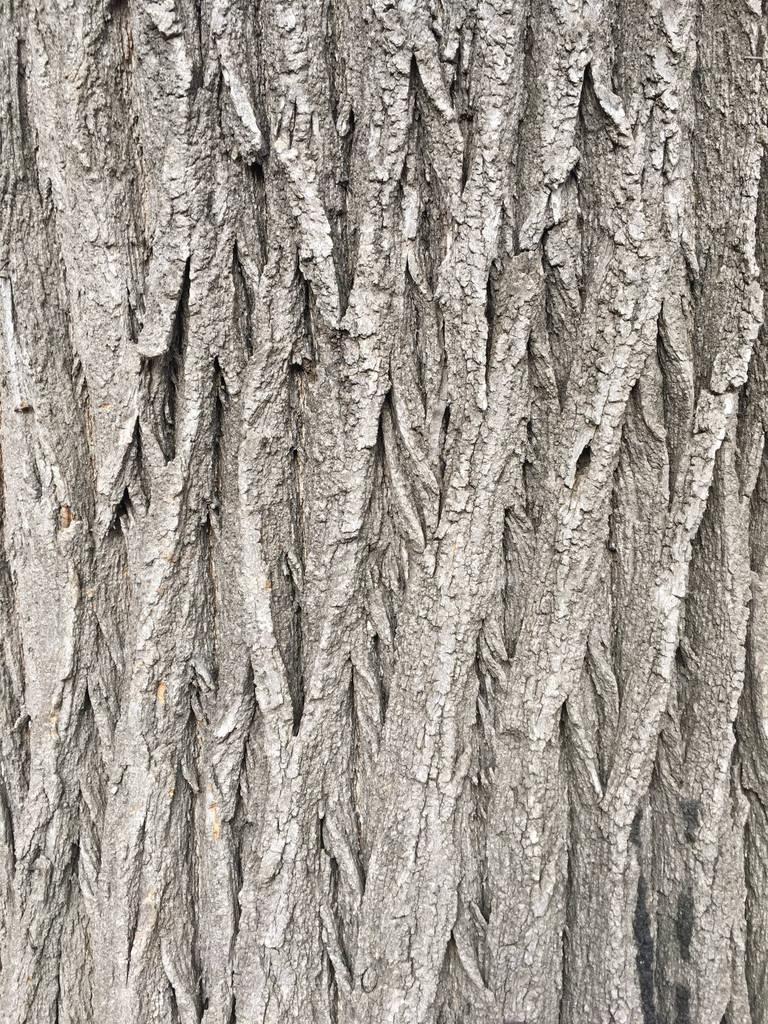 自然褐色_自然老褐色外壳木质地图案或树皮木背景为内部或外部设计与 ...