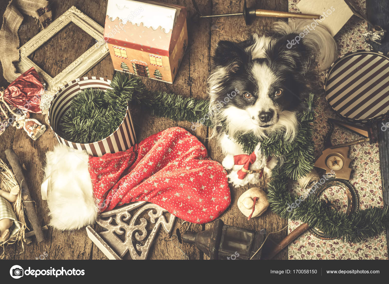 Dog Christmas cards, naughty puppy — Stock Photo © Risia #170058150