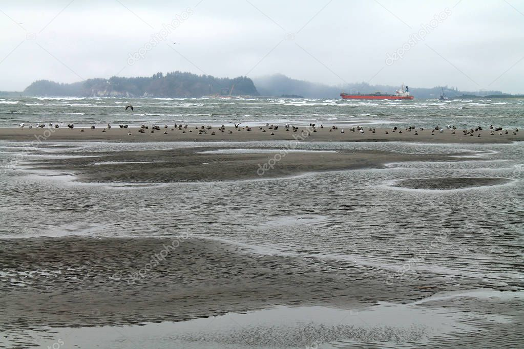 Beach at Low Tide with Seagulls and Red Freighter in the backgro