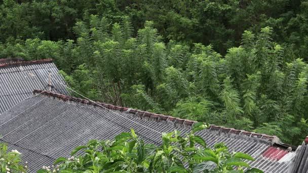 https://st3.depositphotos.com/1125497/12568/v/600/depositphotos_125689360-stockvideo-groene-tropische-planten-jungle-achtergrond.jpg