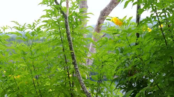Čerstvé bio zdravé zelené pozadí s světlé letní slunce a centrální copyspace pro text nebo reklama. Zelené tropické rostliny v Indonésii, v Asii, ostrov Lembongan