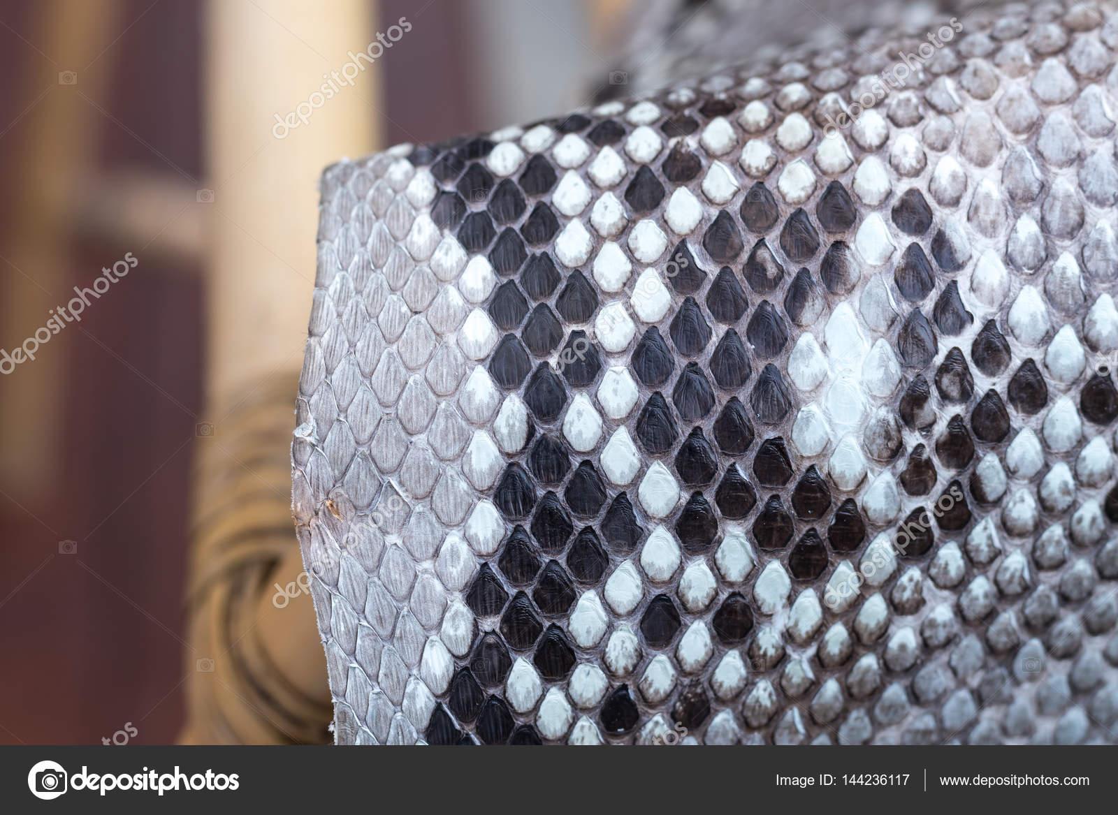 Cuero de piel de serpiente Pitón auténtica, piel de serpiente, Fondo ...