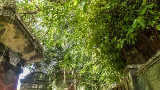 4k Zeitraffer tropischer Regenwald auf der Insel Bali, Indonesien. Grüner Zeitraffer.