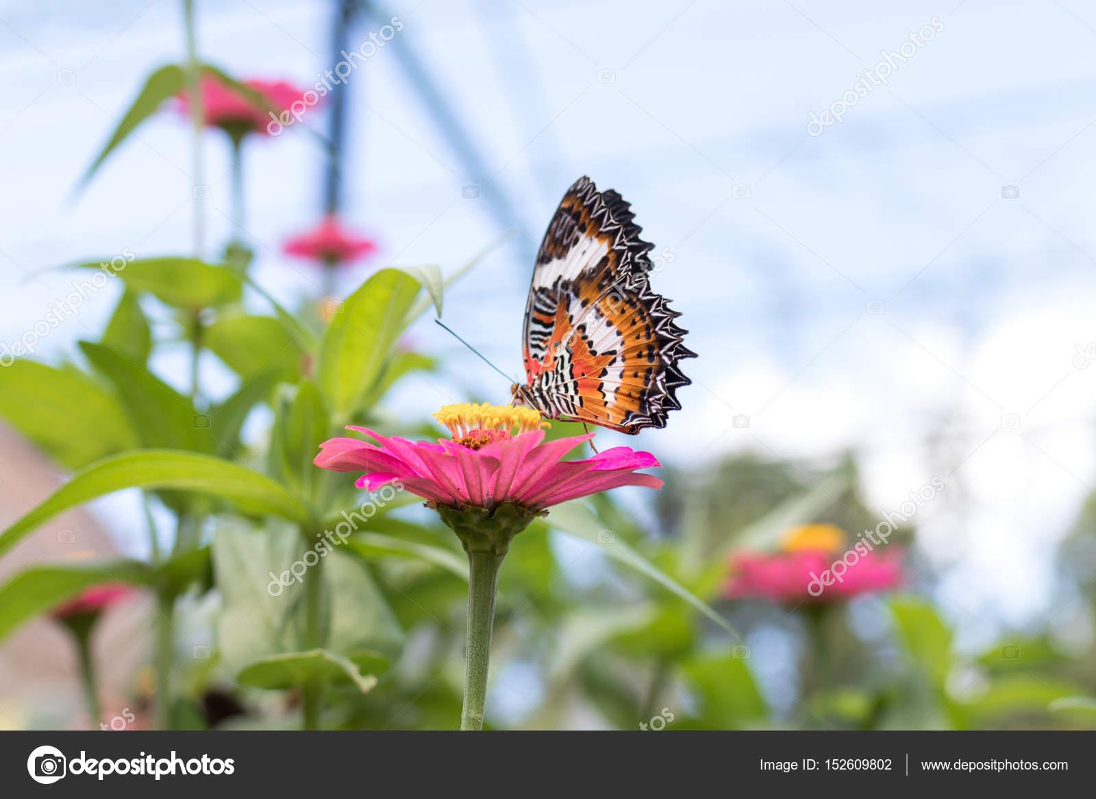 Exotischer Schmetterling Auf Blumen Schmetterling Und Blume Im