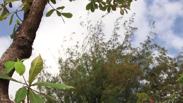 Korona fa világos kora reggel felhős ég. Egzotikus trópusi sziget, Bali, Indonézia. Paradise színhelyén.