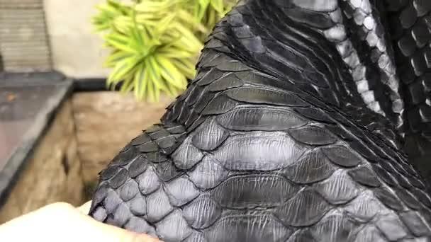 Kůže textury zavřít nahoru, hadí kůže python. Kožená bunda