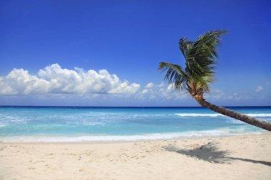 Tropical beach. Barbados