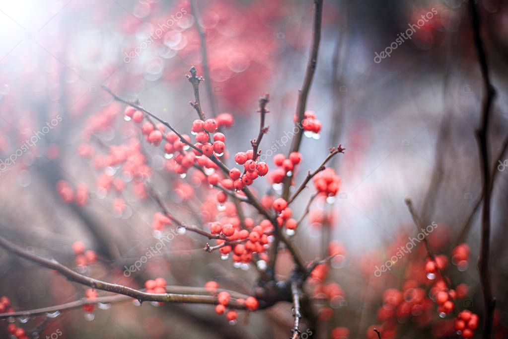 Red berries background