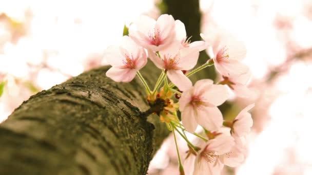 Tradiční lidové ozdoby na Kvetoucí třešeň