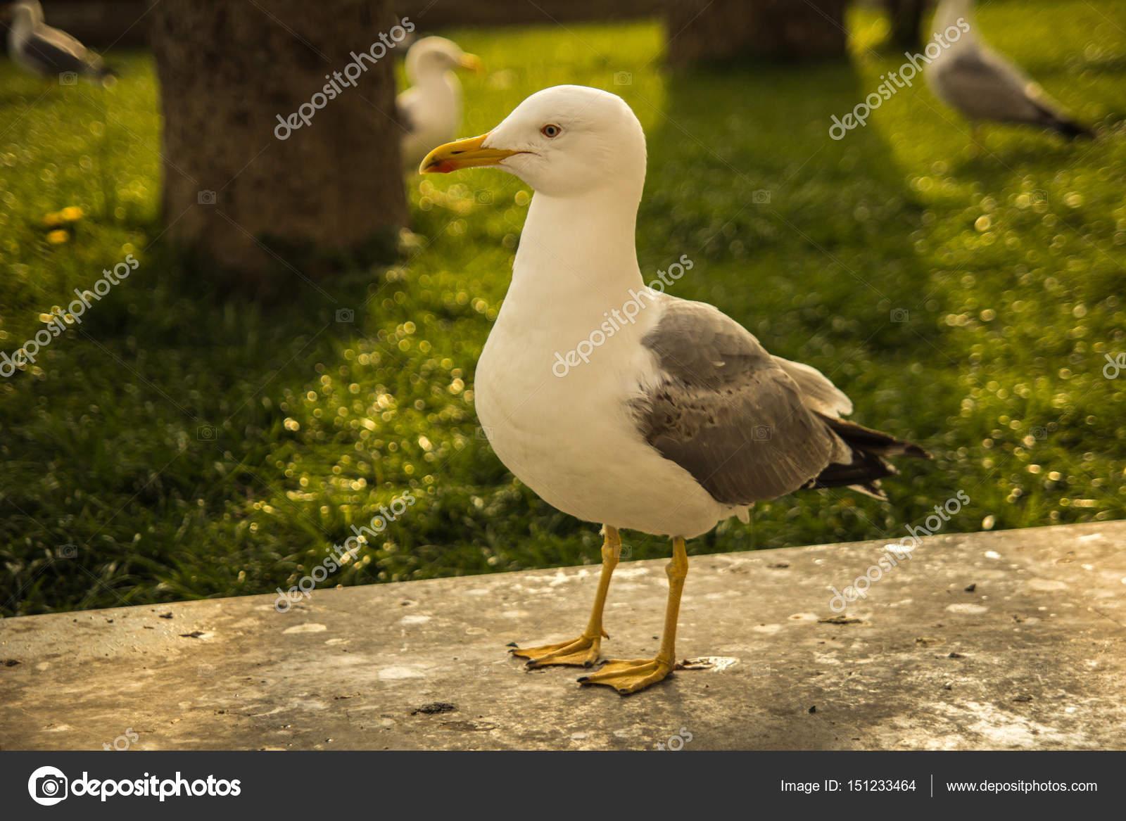 Μεγάλο λευκό πουλί