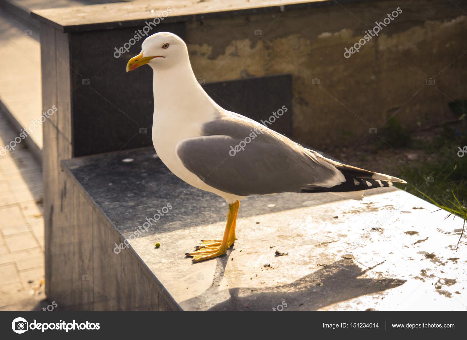 Φωτογραφίες από μεγάλο λευκό πουλί τελευταίες μαύρες φωτογραφίες σεξ