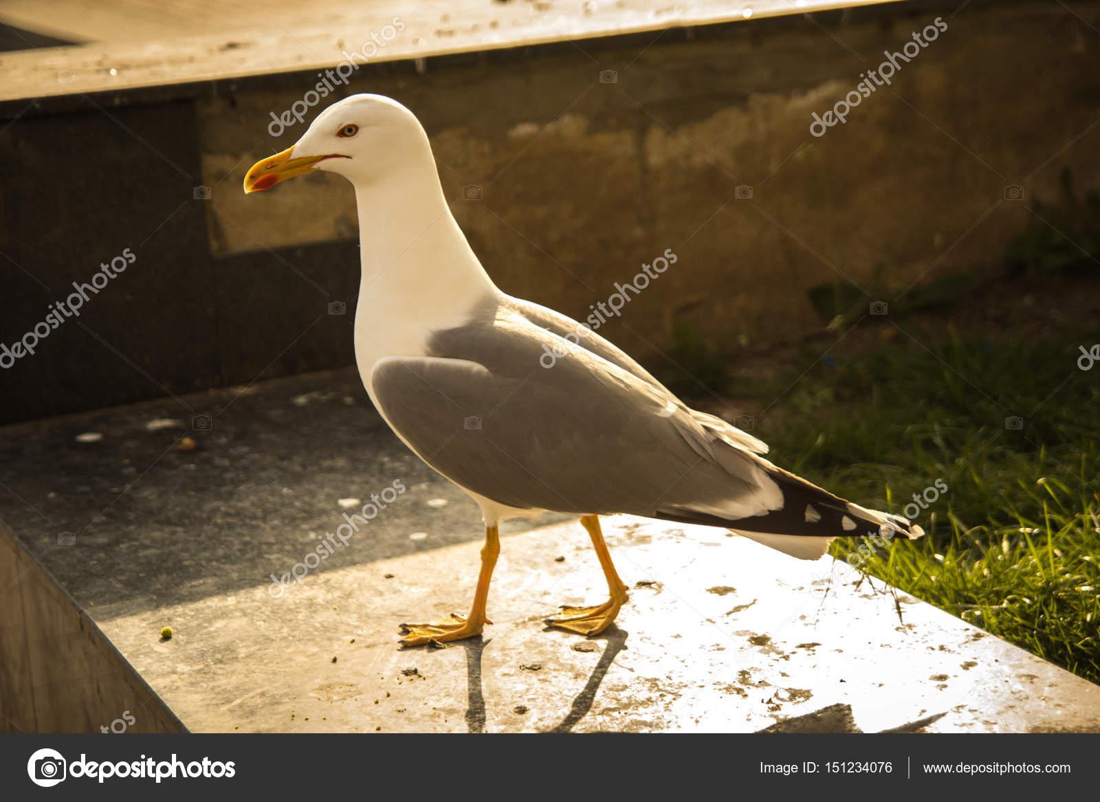 μεγάλο λευκό πουλί εικόνα παθιασμένο Ebony πορνό