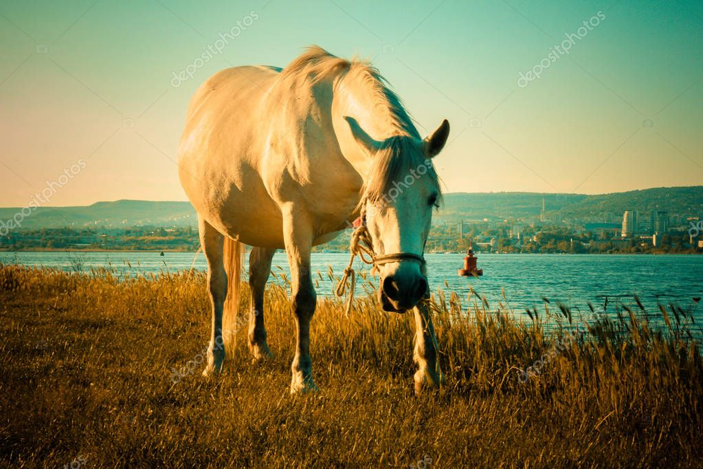 horse grazing next to the lake