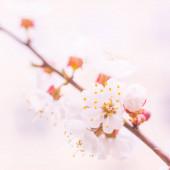 Abstraktní rozmazané květinové pozadí. Plně kvetoucí a první listy lesních stromů. Jaro, hostina, oslava a krásná květinová dekorace koncepce. Detailní záběr s měkkým selektivním zaměřením