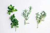 Čerstvé bylinky na bílém pozadí: rozmarýn, tymián, máta a petržel v malých svazcích izolované