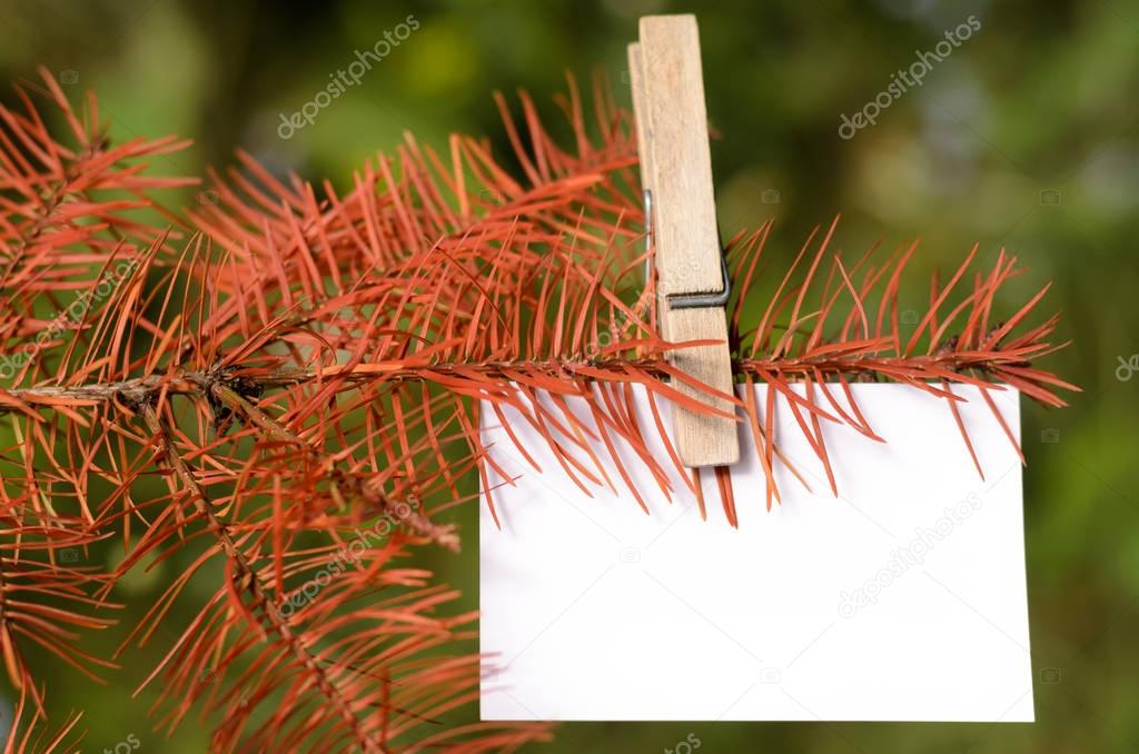 Blank card pinned on a tree