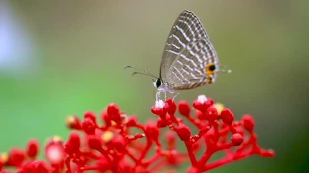 Vértes pillangó piros orchidea.