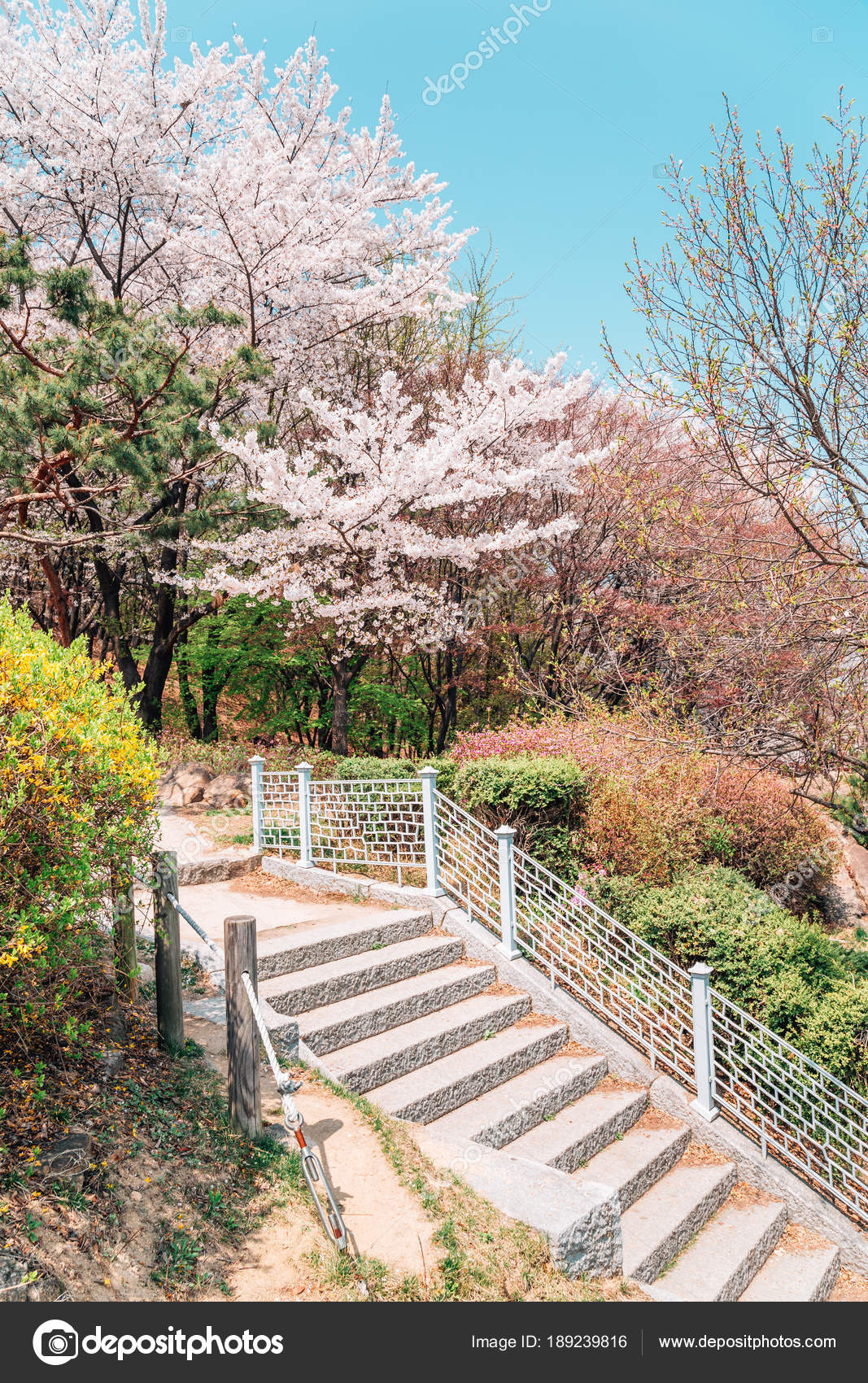 Spring Flowers Park In Suwon Korea Stock Photo C Sangapark 189239816
