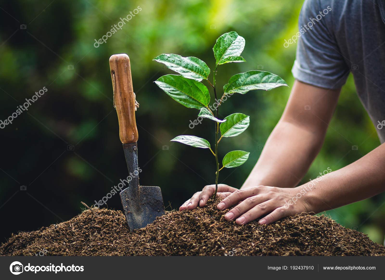 Cultiver Les Fruits Passion Planter Arbre Dans Nature Photographie