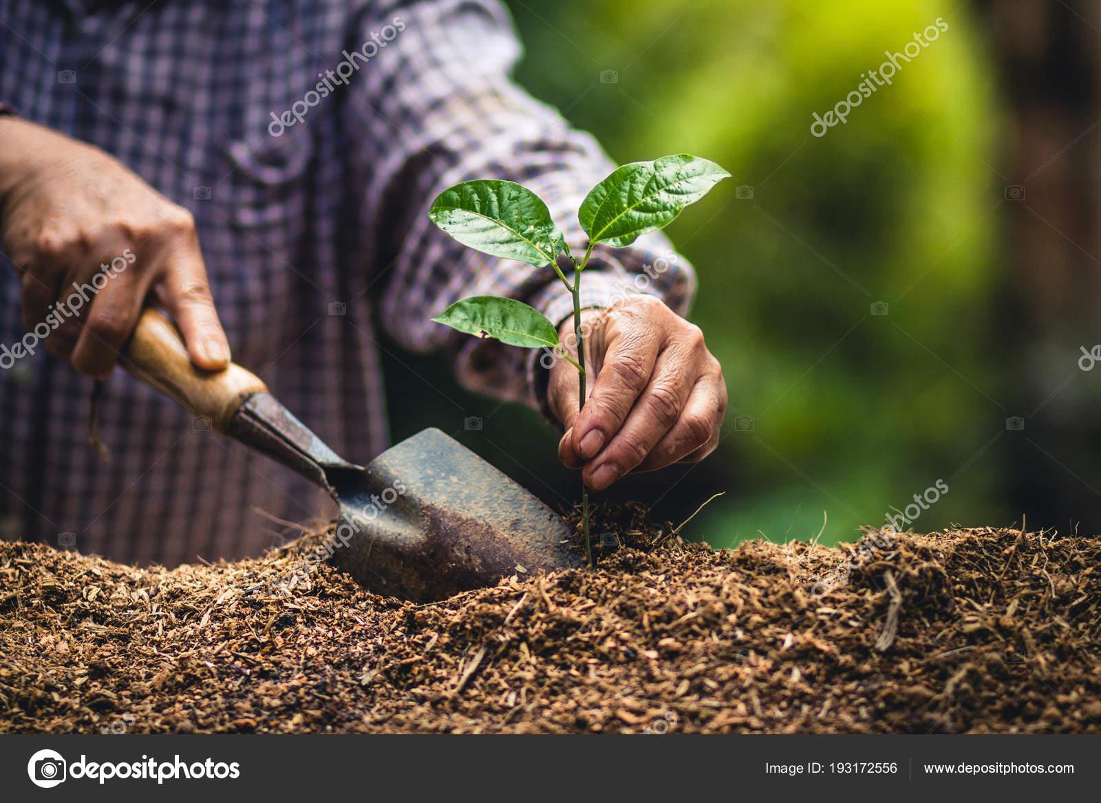 Planter Une Forte Semis Arbres Fruit Passion Jeune Arbre Plantation