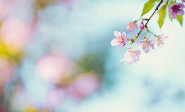 """Картина, постер, плакат, фотообои """"Весенняя природа, цветущие розовые цветы и яркое небо"""", артикул 332267614"""