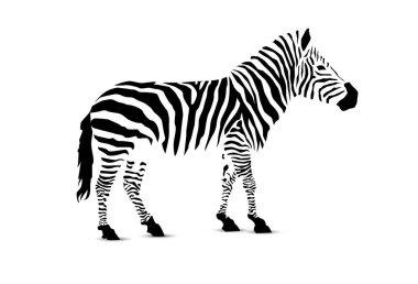 Silhouette of zebra.