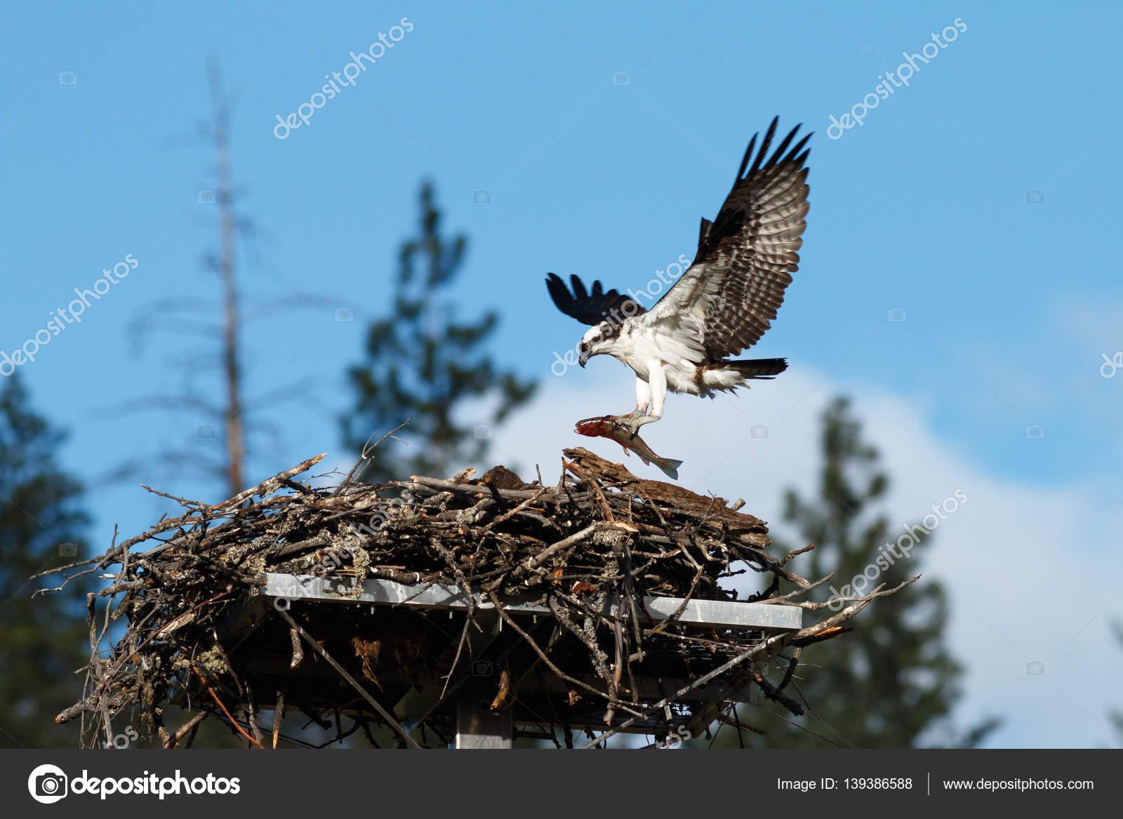 Γκόμενα με τεράστιο πουλί