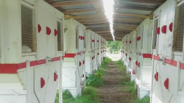 Menge von Zellen mit weißen Kaninchen auf Bauernhof im Sommertag