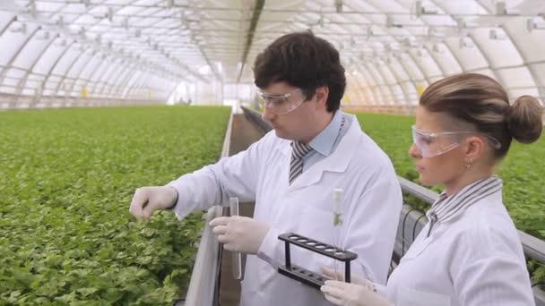 Odborníci se zelených zkumavek v průmyslových skleníku