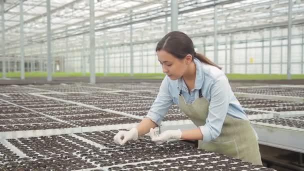 Mladá žena odplevelení zelený salát sazenice ve skleníku na hydroponii doma